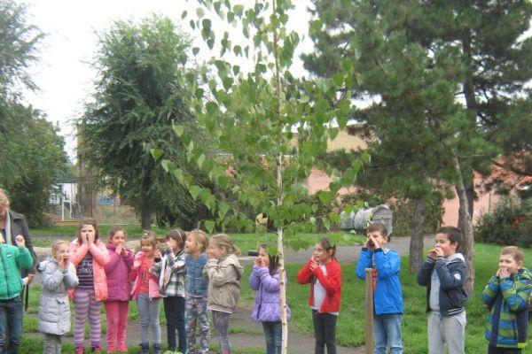 Прваци саде дрво генерације